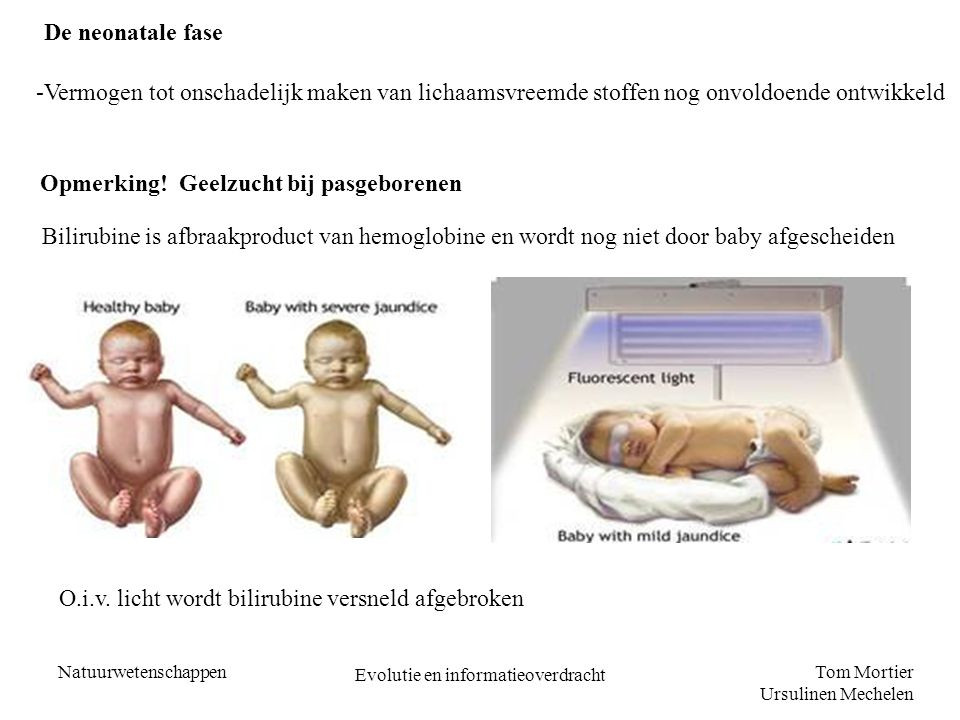 Tom Mortier Ursulinen Mechelen Natuurwetenschappen Evolutie en informatieoverdracht De neonatale fase -Vermogen tot onschadelijk maken van lichaamsvre