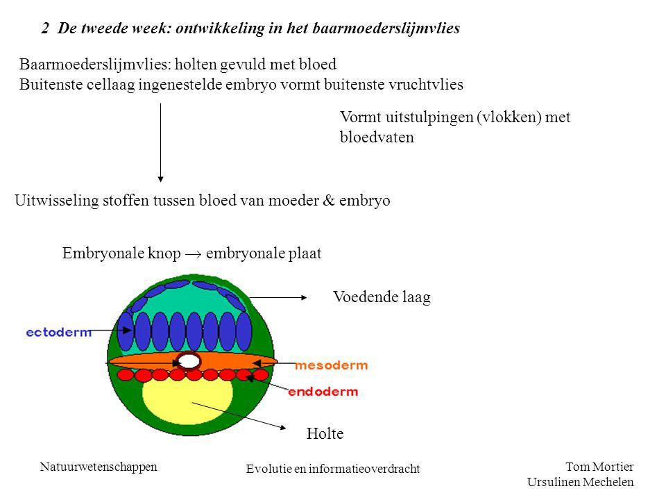 Tom Mortier Ursulinen Mechelen Natuurwetenschappen Evolutie en informatieoverdracht 3 De derde week: differentiatie Ontstaan van het mesoderm tussen het ectoderm en het endoderm Daarna differentiatie van het embryo Ectoderm vormt huid- en zenuwweefsel met zintuigen Endoderm vormt het spijsverteringsstelsel en ademhalingsstelsel Mesoderm vormt skelet, spieren, transport-, excretie-, en voortplantingsstelsel