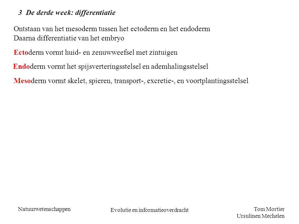 Tom Mortier Ursulinen Mechelen Natuurwetenschappen Evolutie en informatieoverdracht 3 De derde week: differentiatie Ontstaan van het mesoderm tussen h