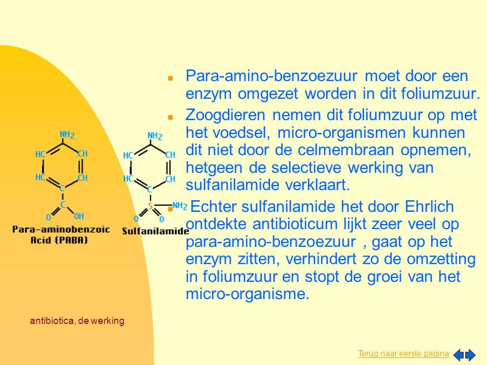 Terug naar eerste pagina antibiotica, de werking Het foppen in beeld: n Para-amino-benzoezuur moet door een enzym omgezet worden in dit foliumzuur. n