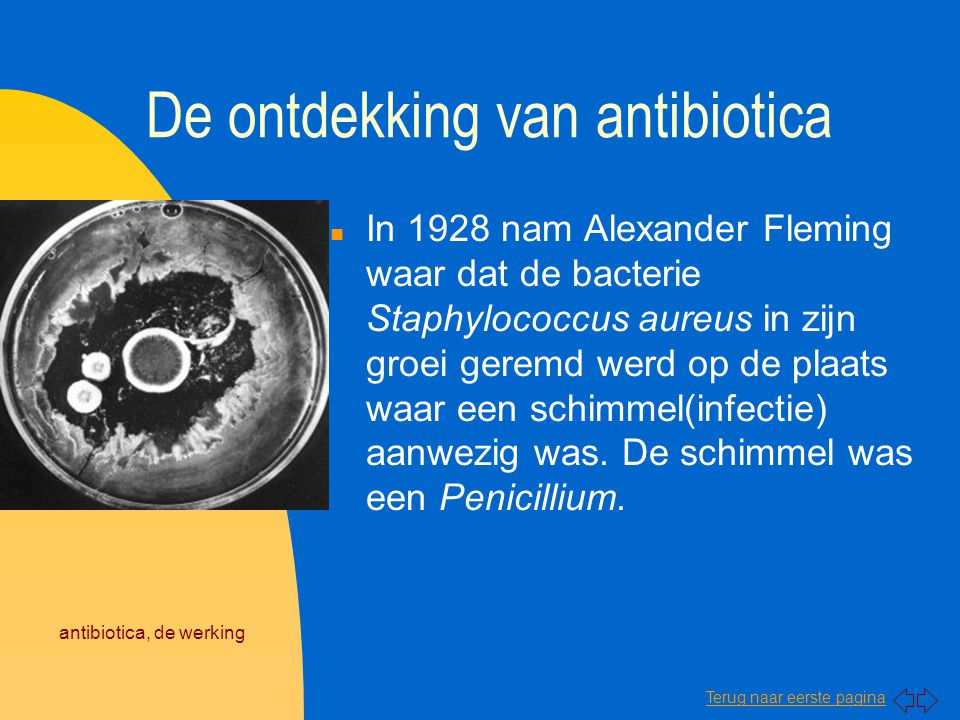 Terug naar eerste pagina antibiotica, de werking De ontdekking van antibiotica n In 1928 nam Alexander Fleming waar dat de bacterie Staphylococcus aur