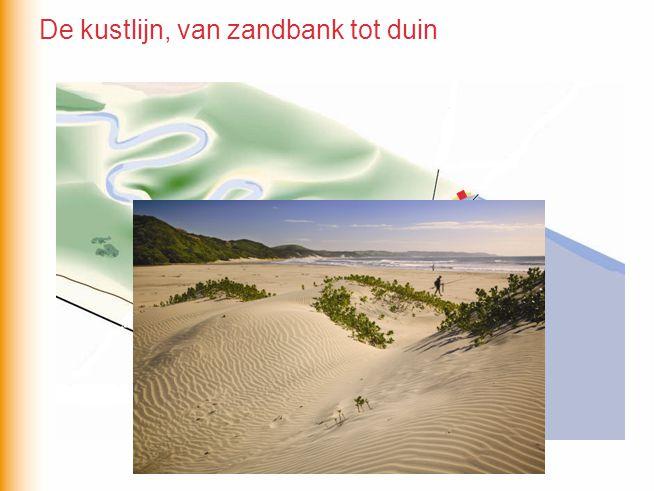 De kustlijn, van zandbank tot duin