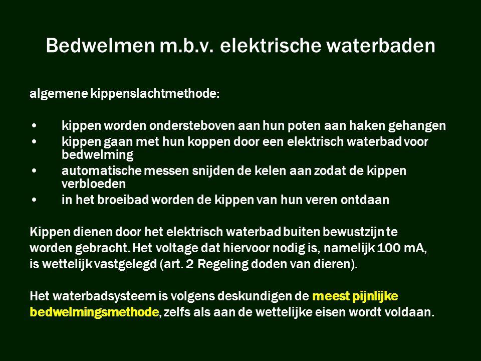 Bedwelmen m.b.v. elektrische waterbaden algemene kippenslachtmethode: •kippen worden ondersteboven aan hun poten aan haken gehangen •kippen gaan met h