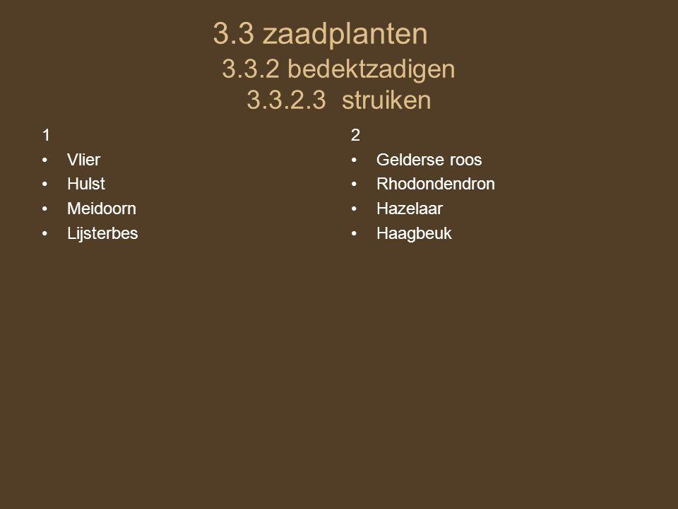 3.3 zaadplanten 3.3.2 bedektzadigen 3.3.2.3 struiken 1 •Vlier •Hulst •Meidoorn •Lijsterbes 2 •Gelderse roos •Rhodondendron •Hazelaar •Haagbeuk