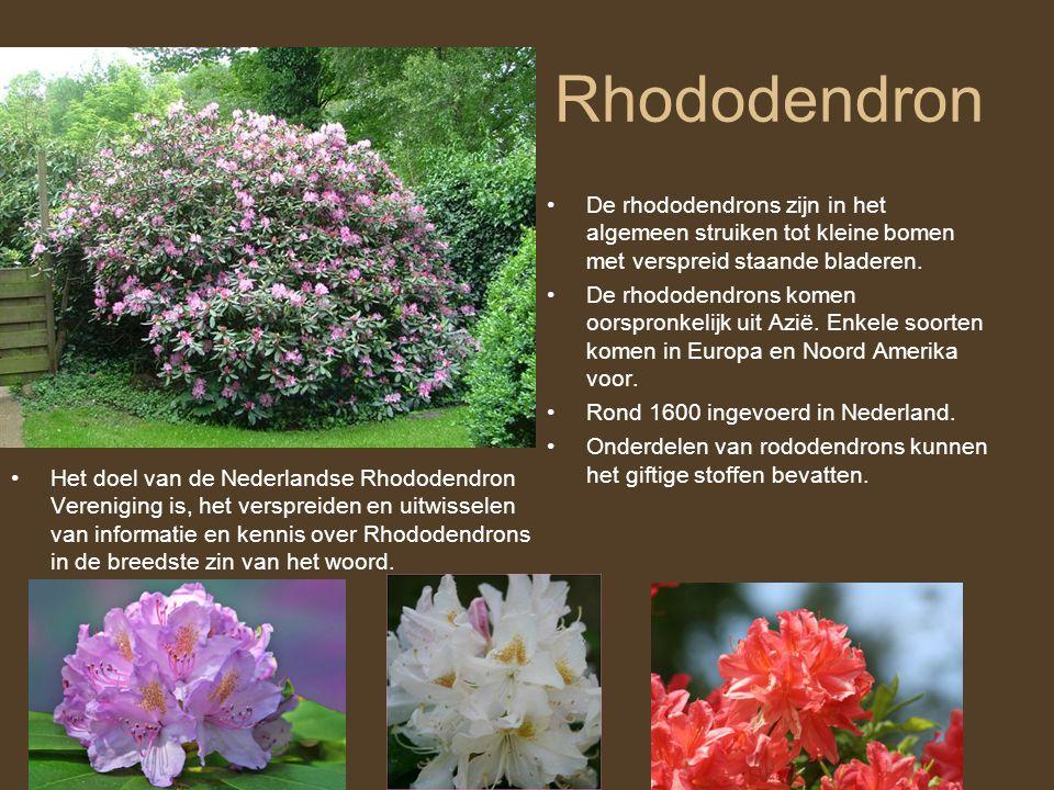 Rhododendron •Het doel van de Nederlandse Rhododendron Vereniging is, het verspreiden en uitwisselen van informatie en kennis over Rhododendrons in de
