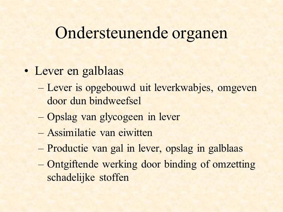 Ondersteunende organen •Lever en galblaas –Lever is opgebouwd uit leverkwabjes, omgeven door dun bindweefsel –Opslag van glycogeen in lever –Assimilat