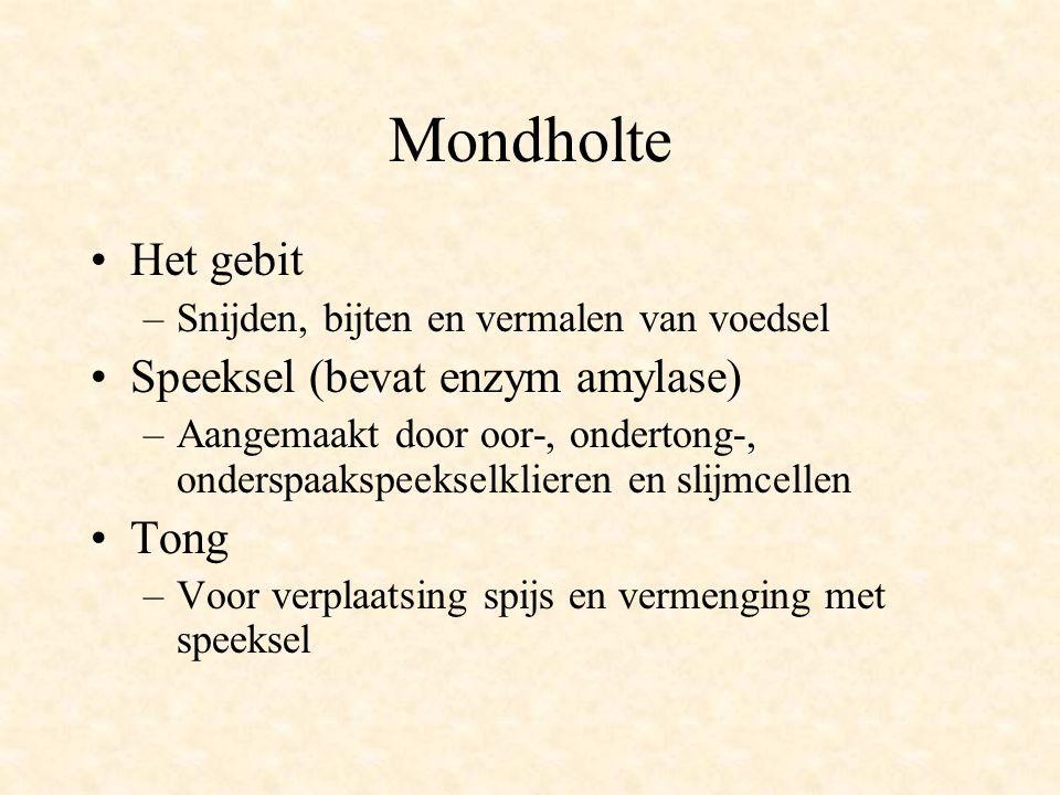 Mondholte •Het gebit –Snijden, bijten en vermalen van voedsel •Speeksel (bevat enzym amylase) –Aangemaakt door oor-, ondertong-, onderspaakspeekselkli