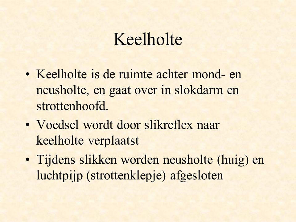 Keelholte •Keelholte is de ruimte achter mond- en neusholte, en gaat over in slokdarm en strottenhoofd. •Voedsel wordt door slikreflex naar keelholte