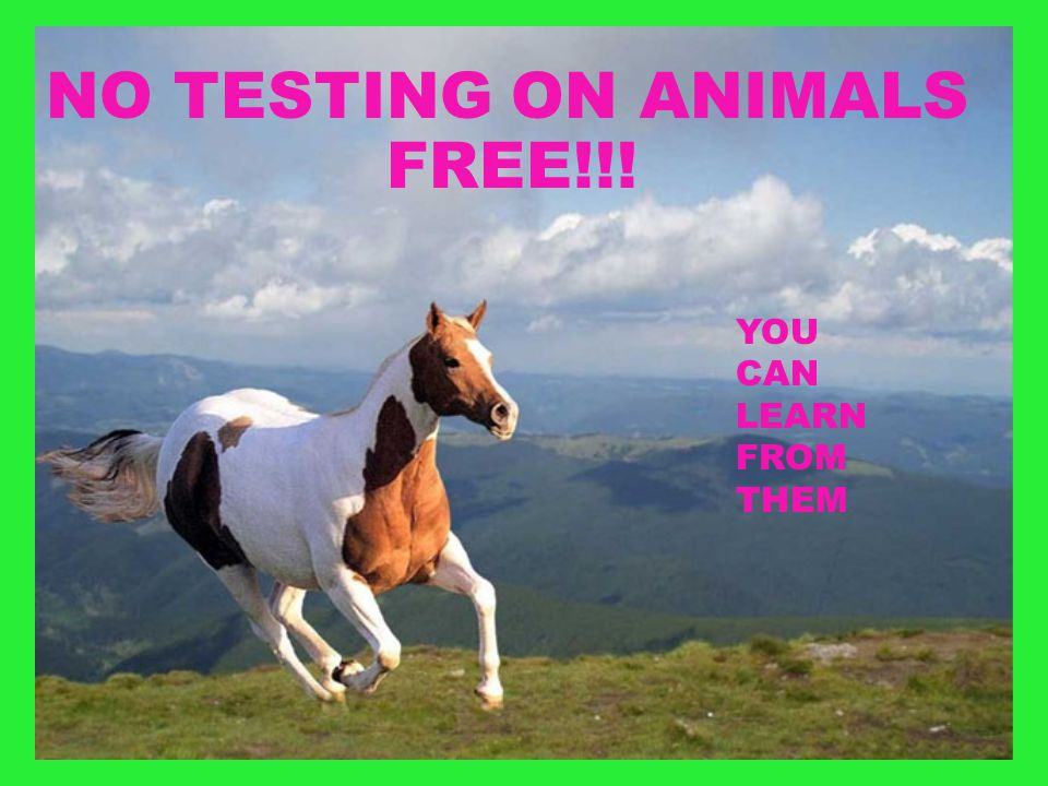 NO TESTING ON ANIMALS YOU CAN LEARN FROM THEM FREE!!!