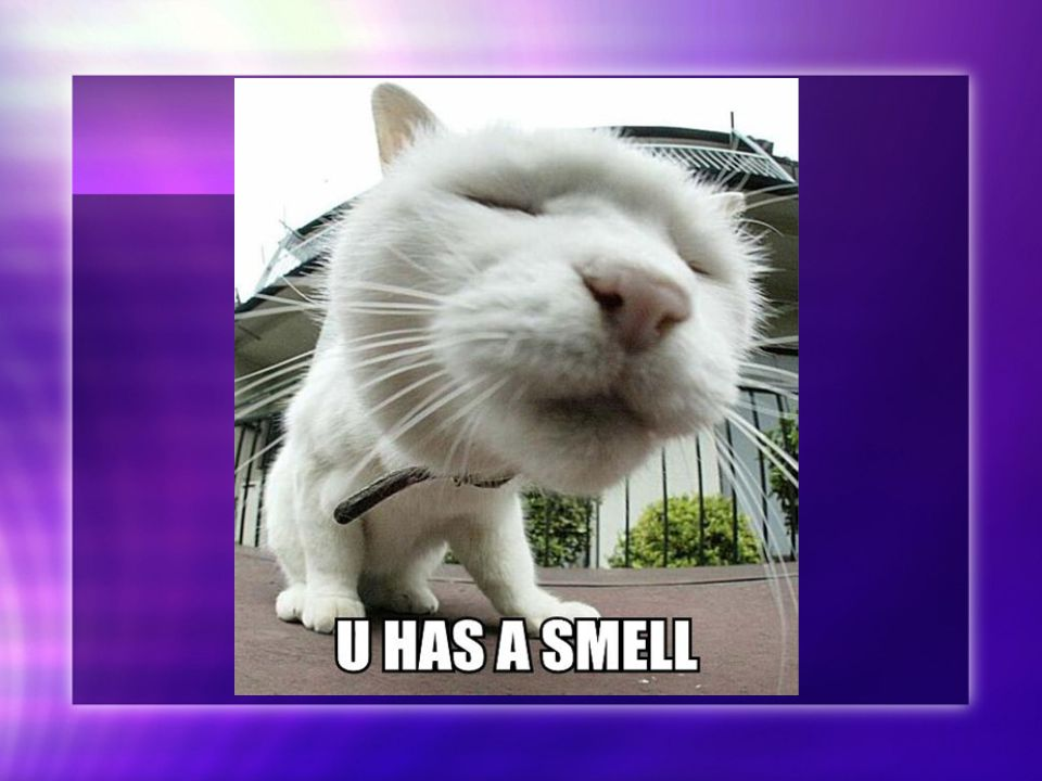 Smell Ik heb veel onaangenaamde geurtjes geroken, sinds ik er op ging letten voor mijn opdracht.