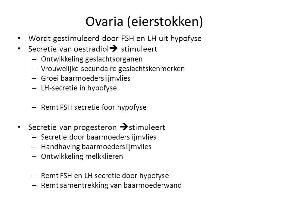 Ovaria (eierstokken) • Wordt gestimuleerd door FSH en LH uit hypofyse • Secretie van oestradiol  stimuleert – Ontwikkeling geslachtsorganen – Vrouwel