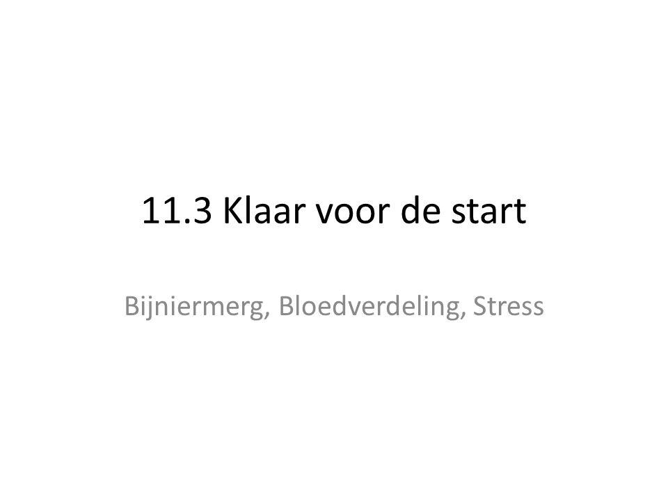 11.3 Klaar voor de start Bijniermerg, Bloedverdeling, Stress
