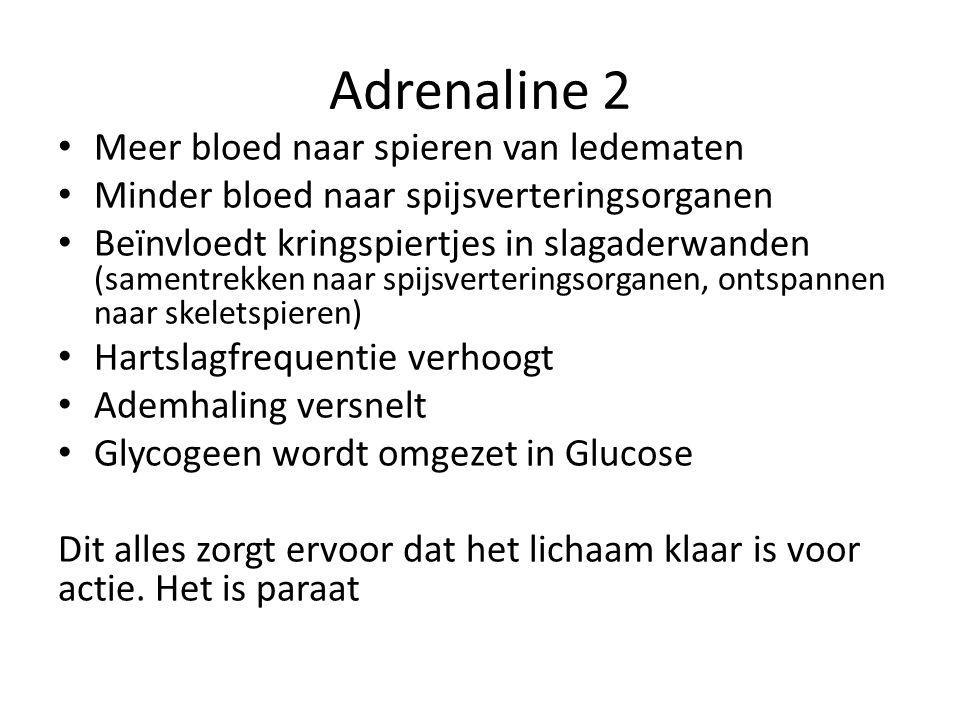 Adrenaline 2 • Meer bloed naar spieren van ledematen • Minder bloed naar spijsverteringsorganen • Beïnvloedt kringspiertjes in slagaderwanden (samentr