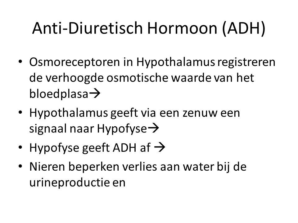 Anti-Diuretisch Hormoon (ADH) • Osmoreceptoren in Hypothalamus registreren de verhoogde osmotische waarde van het bloedplasa  • Hypothalamus geeft vi