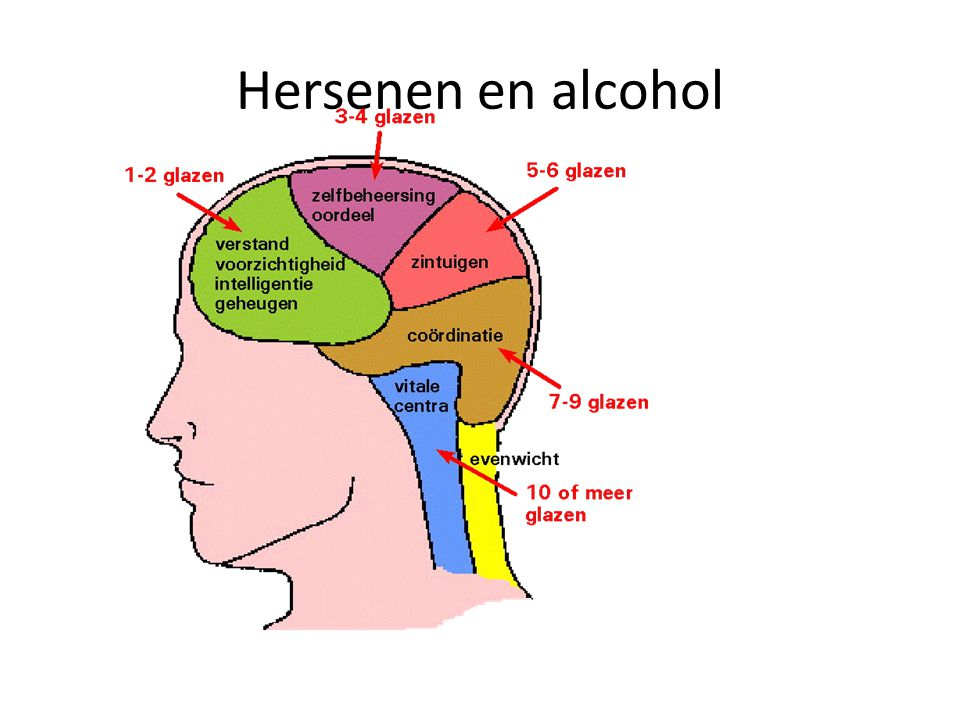 Hersenen en alcohol