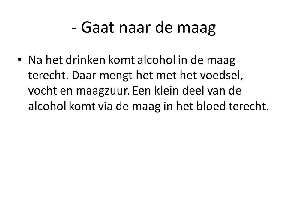 - Gaat naar de maag • Na het drinken komt alcohol in de maag terecht. Daar mengt het met het voedsel, vocht en maagzuur. Een klein deel van de alcohol