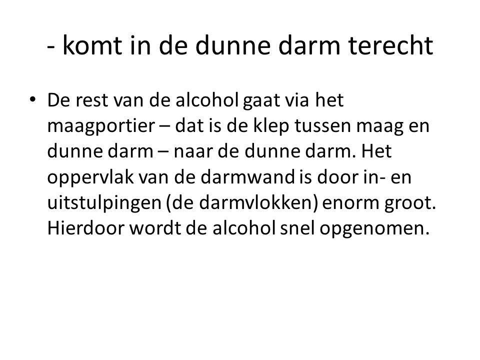 - komt in de dunne darm terecht • De rest van de alcohol gaat via het maagportier – dat is de klep tussen maag en dunne darm – naar de dunne darm. Het