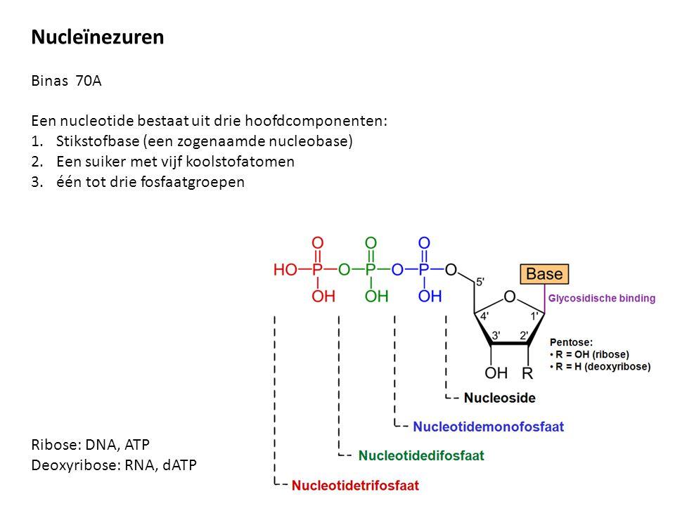 Nucleïnezuren Binas 70A Een nucleotide bestaat uit drie hoofdcomponenten: 1.Stikstofbase (een zogenaamde nucleobase) 2.Een suiker met vijf koolstofato