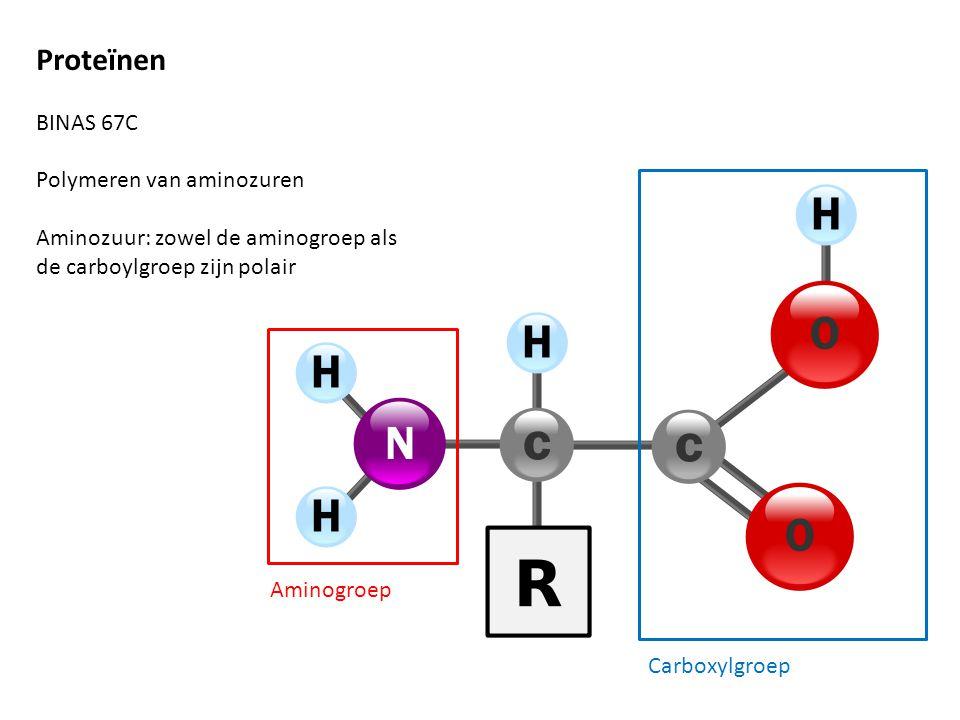Proteïnen BINAS 67C Polymeren van aminozuren Aminozuur: zowel de aminogroep als de carboylgroep zijn polair Aminogroep Carboxylgroep