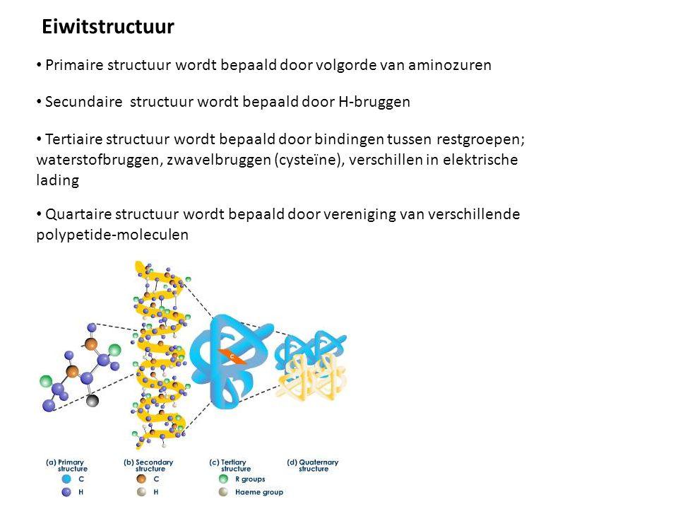 • Primaire structuur wordt bepaald door volgorde van aminozuren • Secundaire structuur wordt bepaald door H-bruggen Eiwitstructuur • Tertiaire structuur wordt bepaald door bindingen tussen restgroepen; waterstofbruggen, zwavelbruggen (cysteïne), verschillen in elektrische lading • Quartaire structuur wordt bepaald door vereniging van verschillende polypetide-moleculen