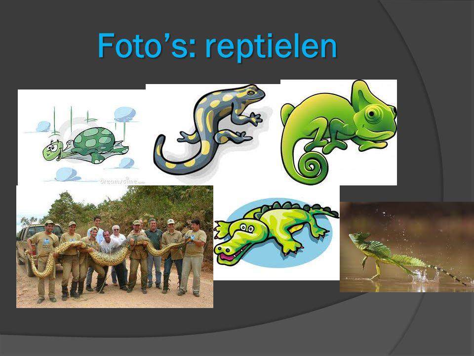 Foto's: reptielen