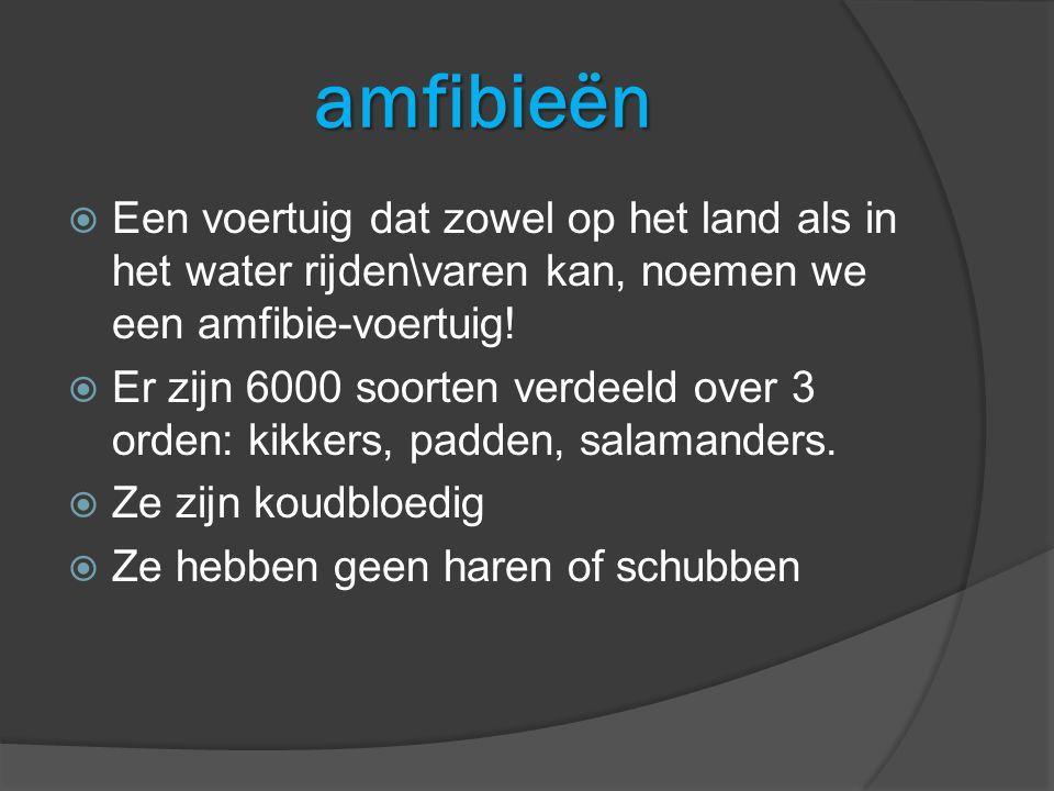 amfibieën  Een voertuig dat zowel op het land als in het water rijden\varen kan, noemen we een amfibie-voertuig.