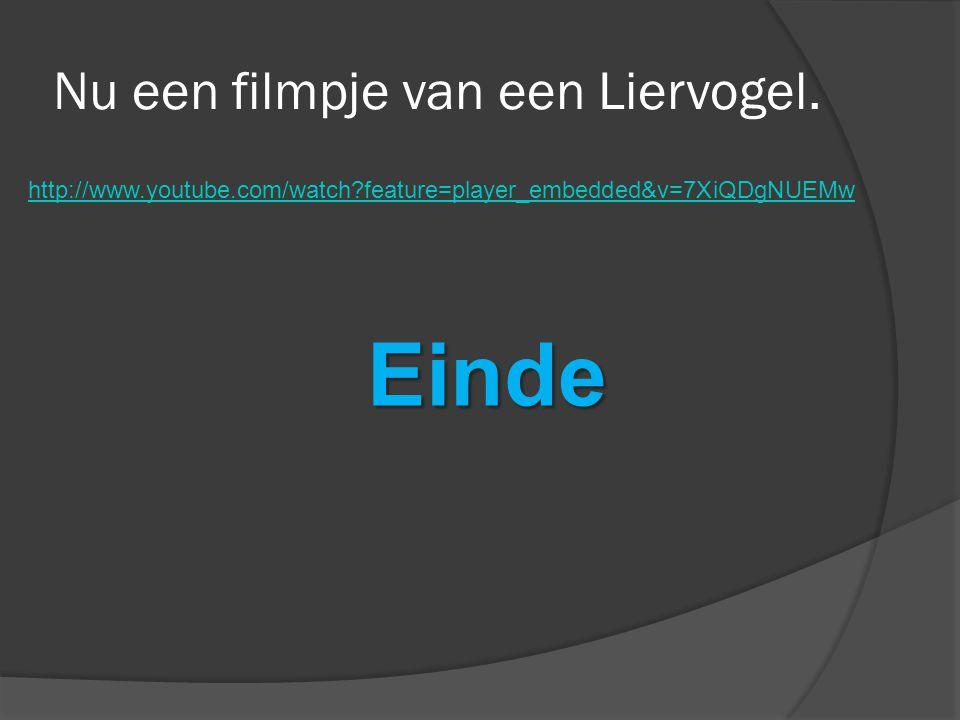 http://www.youtube.com/watch?feature=player_embedded&v=7XiQDgNUEMwEinde Nu een filmpje van een Liervogel.