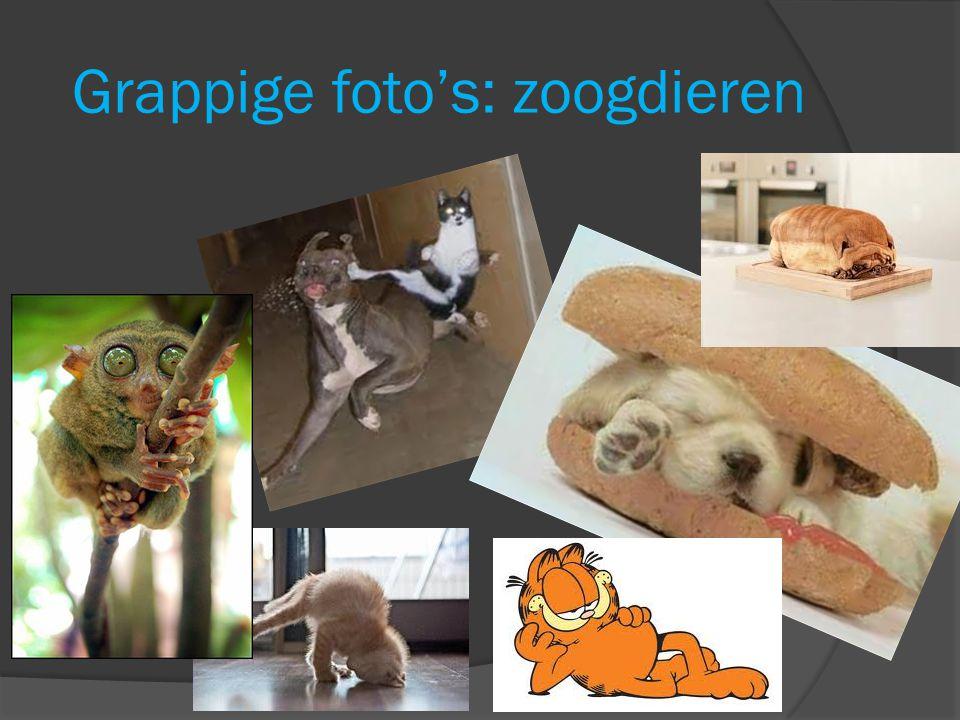 Grappige foto's: zoogdieren