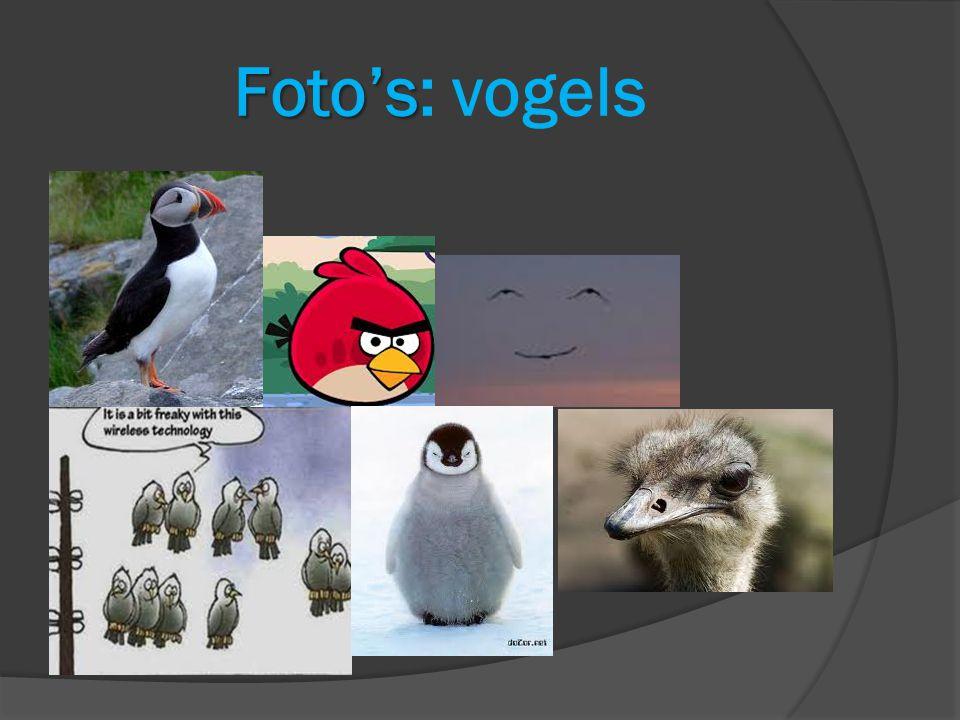 Foto's Foto's: vogels