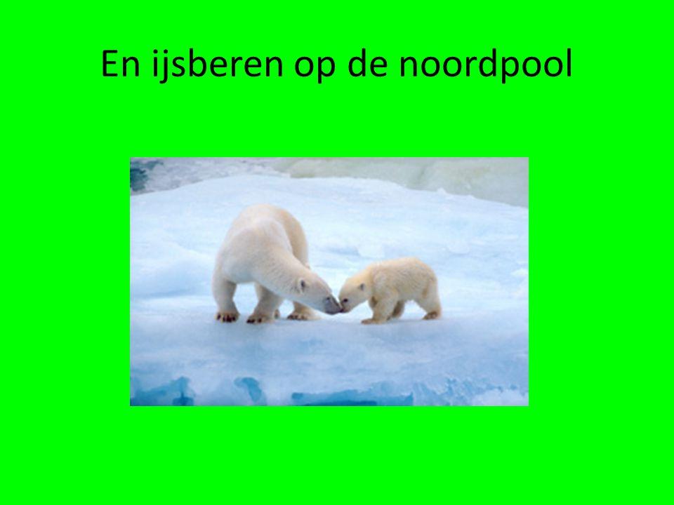 verschillen • Op de Zuidpool is het veel kouder dan op de Noordpool.