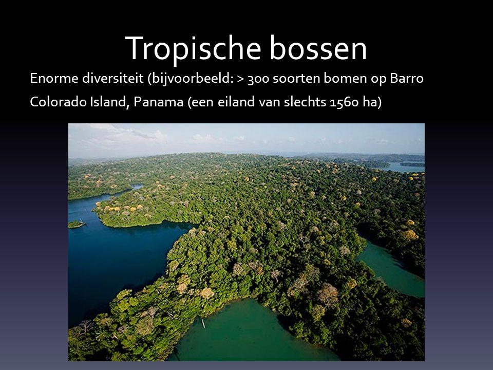 Tropisch Regenwoud • Waarom zo'n grote diversiteit in de tropen.