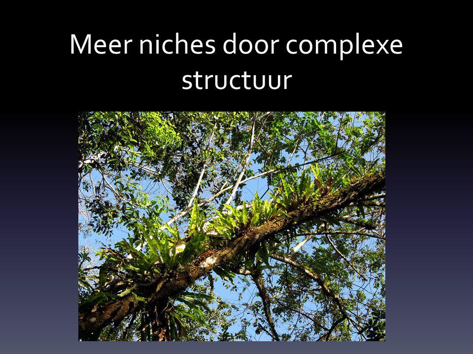 Meer niches door complexe structuur