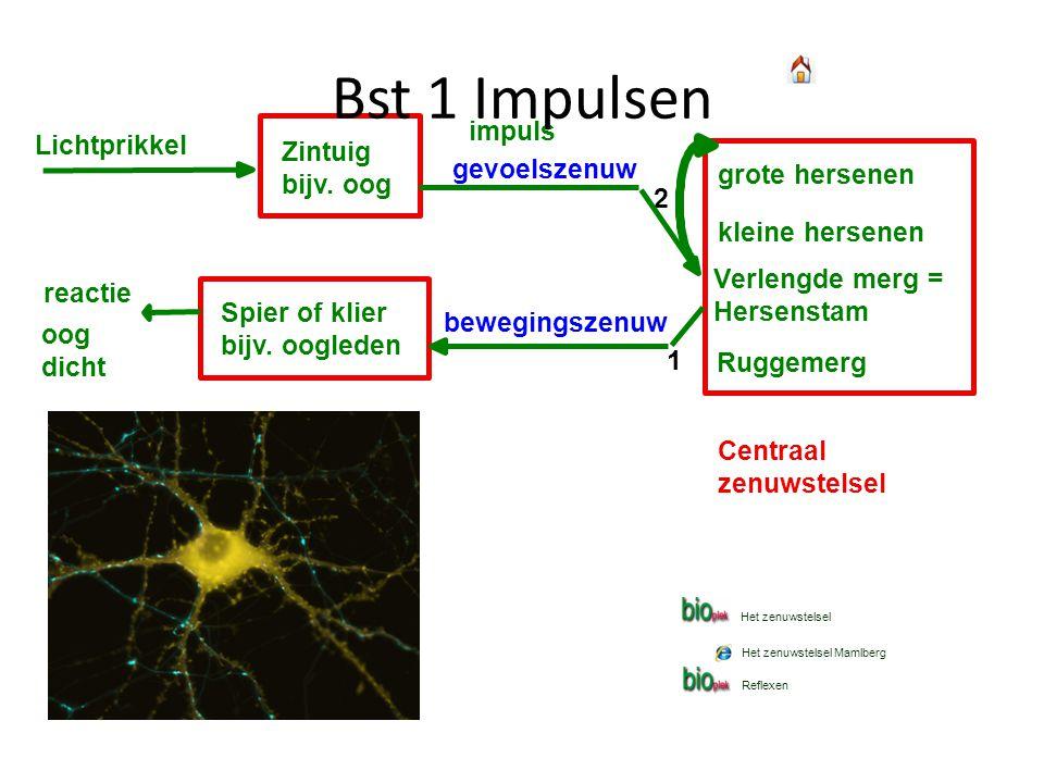 Lichtprikkel Zintuig bijv. oog impuls reactie oog dicht grote hersenen kleine hersenen Verlengde merg = Hersenstam Ruggemerg Centraal zenuwstelsel gev