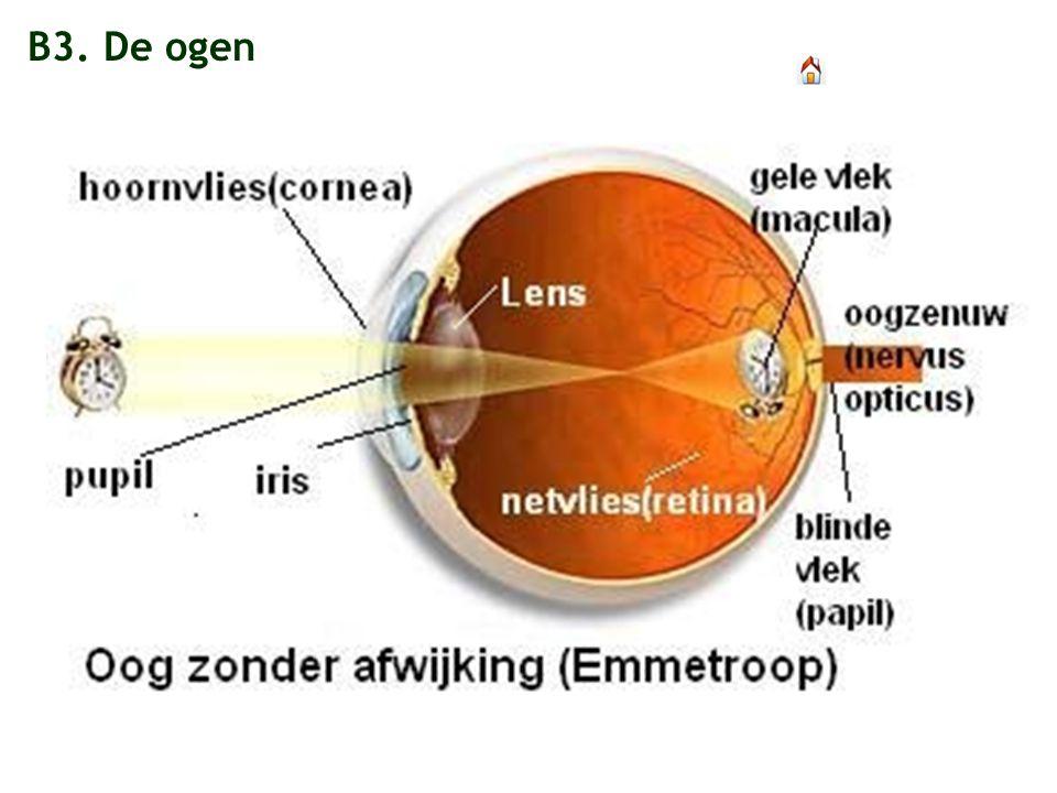 B3. De ogen