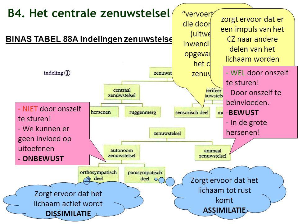 """B4. Het centrale zenuwstelsel BINAS TABEL 88A Indelingen zenuwstelsel """"vervoert"""" prikkels die door zintuigen (uitwendig en inwendig) worden opgevangen"""