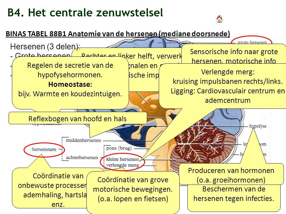 B4. Het centrale zenuwstelsel Beschermen van de hersenen tegen infecties. Coördinatie van onbewuste processen als ademhaling, hartslag, enz. Producere