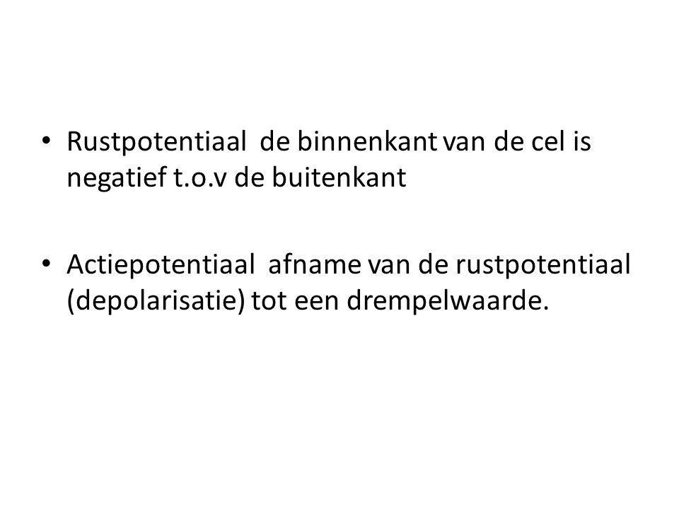• Rustpotentiaal de binnenkant van de cel is negatief t.o.v de buitenkant • Actiepotentiaal afname van de rustpotentiaal (depolarisatie) tot een dremp