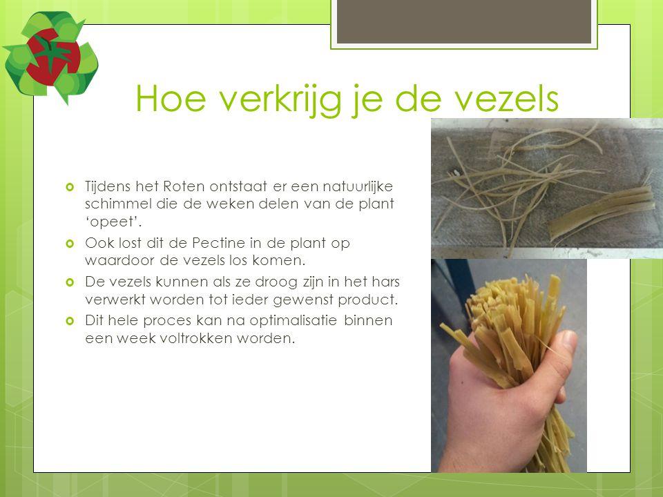 Hoe verkrijg je de vezels  Tijdens het Roten ontstaat er een natuurlijke schimmel die de weken delen van de plant 'opeet'.