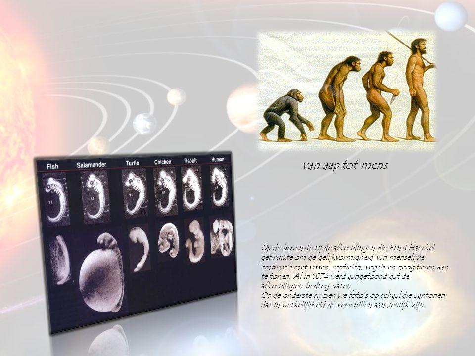 van aap tot mens Op de bovenste rij de afbeeldingen die Ernst Haeckel gebruikte om de gelijkvormigheid van menselijke embryo's met vissen, reptielen,