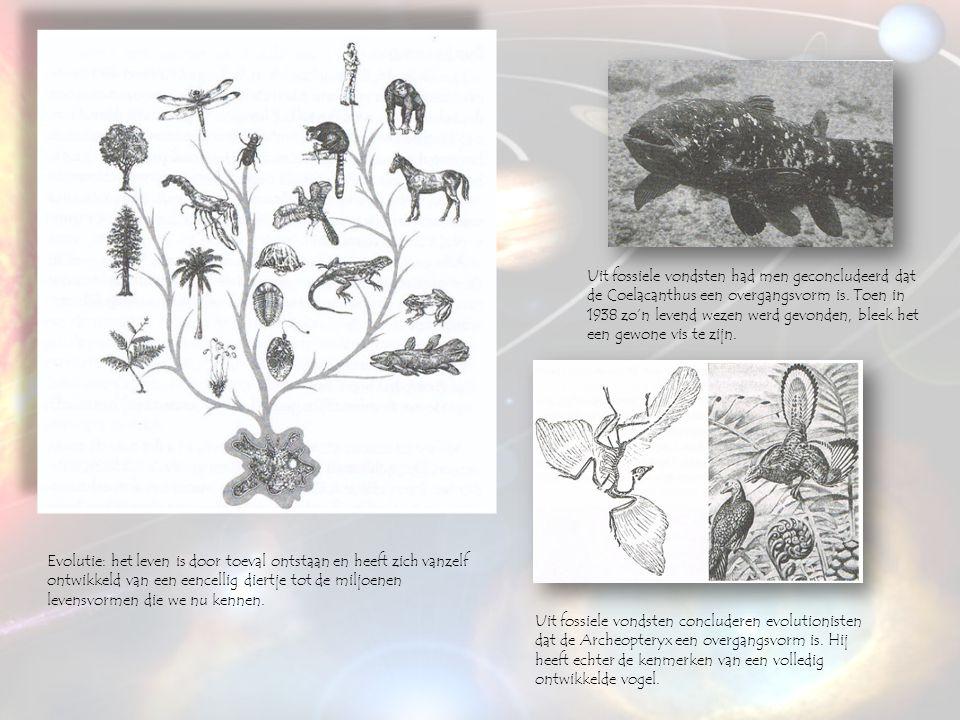 Evolutie: het leven is door toeval ontstaan en heeft zich vanzelf ontwikkeld van een eencellig diertje tot de miljoenen levensvormen die we nu kennen.