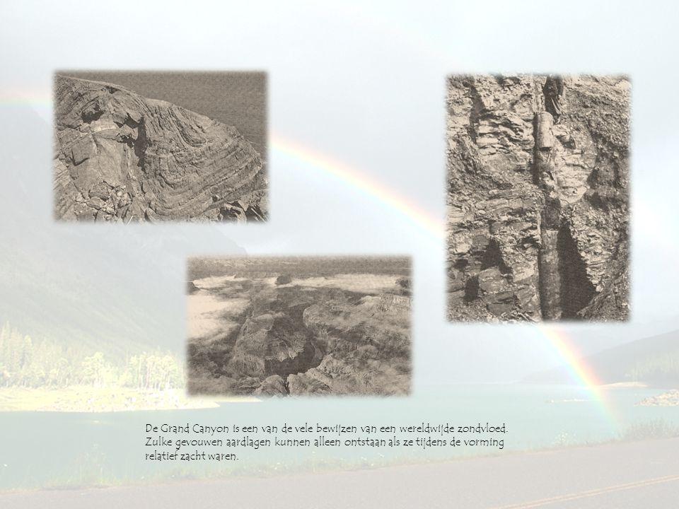 De Grand Canyon is een van de vele bewijzen van een wereldwijde zondvloed. Zulke gevouwen aardlagen kunnen alleen ontstaan als ze tijdens de vorming r
