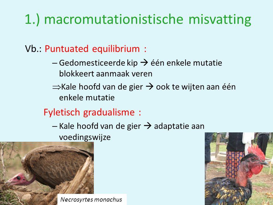 1.) macromutationistische misvatting Vb.: Puntuated equilibrium : – Gedomesticeerde kip  één enkele mutatie blokkeert aanmaak veren  Kale hoofd van