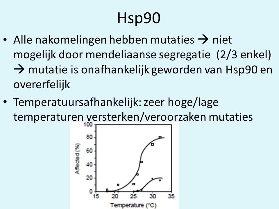 Hsp90 • Alle nakomelingen hebben mutaties  niet mogelijk door mendeliaanse segregatie (2/3 enkel)  mutatie is onafhankelijk geworden van Hsp90 en overerfelijk • Temperatuursafhankelijk: zeer hoge/lage temperaturen versterken/veroorzaken mutaties