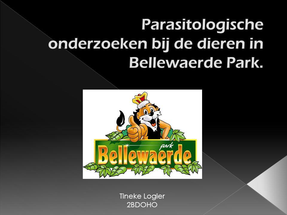 Tineke Logier 2BDOHO