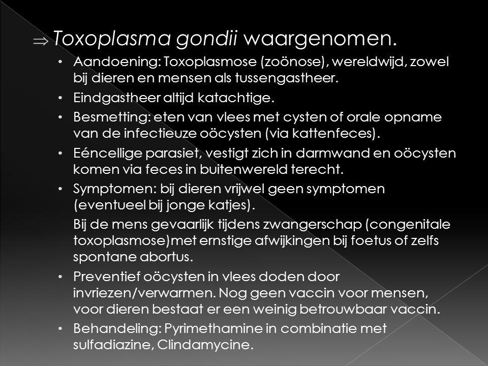 Toxoplasma gondii waargenomen. • Aandoening: Toxoplasmose (zoönose), wereldwijd, zowel bij dieren en mensen als tussengastheer. • Eindgastheer altij
