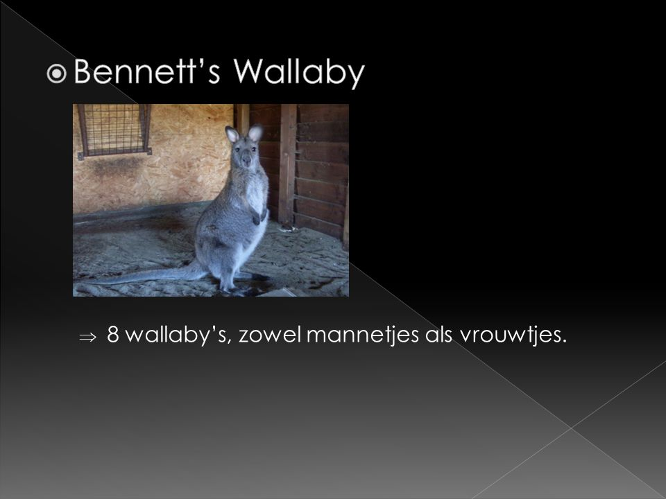  8 wallaby's, zowel mannetjes als vrouwtjes.
