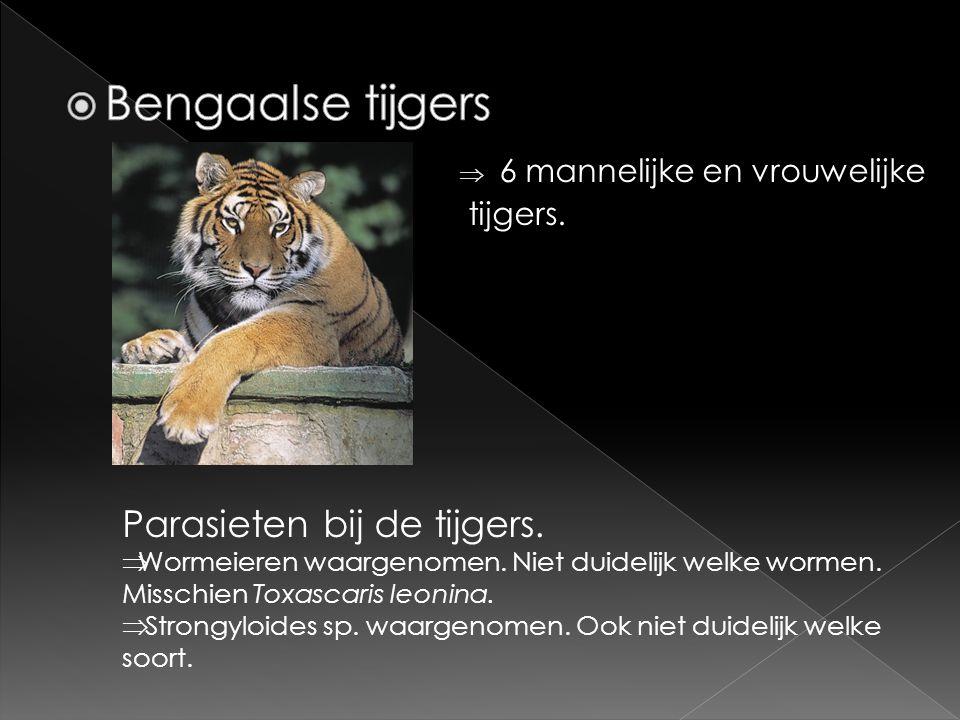  6 mannelijke en vrouwelijke tijgers. Parasieten bij de tijgers.  Wormeieren waargenomen. Niet duidelijk welke wormen. Misschien Toxascaris leonina.