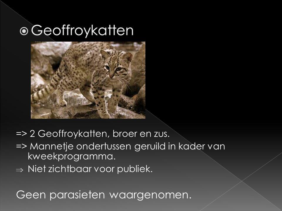=> 2 Geoffroykatten, broer en zus. => Mannetje ondertussen geruild in kader van kweekprogramma.  Niet zichtbaar voor publiek. Geen parasieten waargen