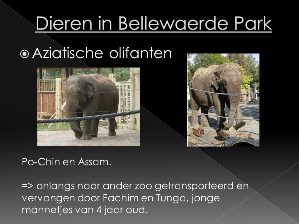  Aziatische olifanten Po-Chin en Assam. => onlangs naar ander zoo getransporteerd en vervangen door Fachim en Tunga, jonge mannetjes van 4 jaar oud.