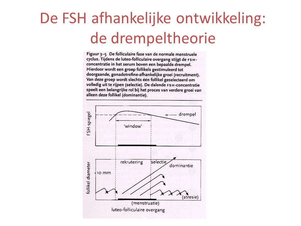 De FSH afhankelijke ontwikkeling: de drempeltheorie